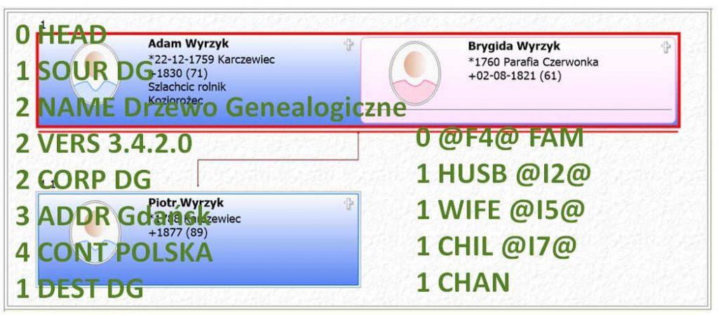 GEDCOM plik drzewo genealogiczne