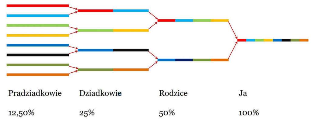 Pochodzenie etniczne według badań DNA dziedziczenie