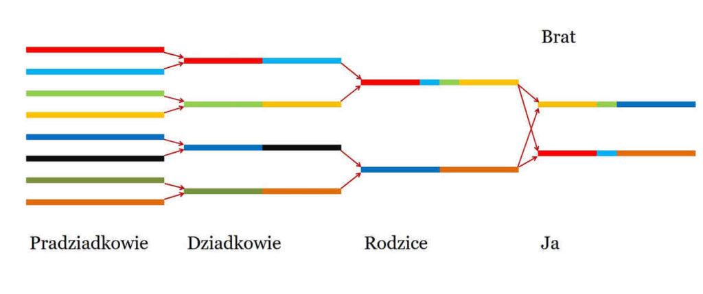 Pochodzenie etniczne według badań DNA dziedziczenie bliższe przybliżenie