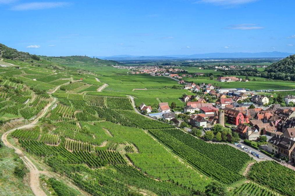 Alzacja Winnice w Kaysersbergu Źródło: Pixabay Ben Kerckx